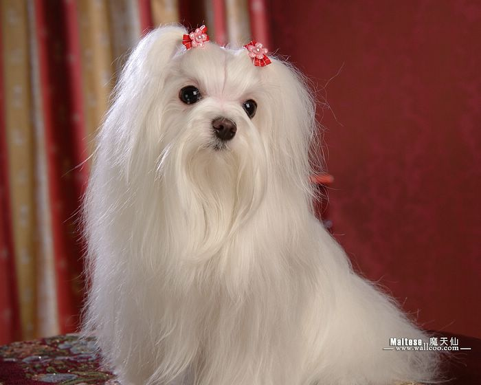 Beautiful White Dog Pictures