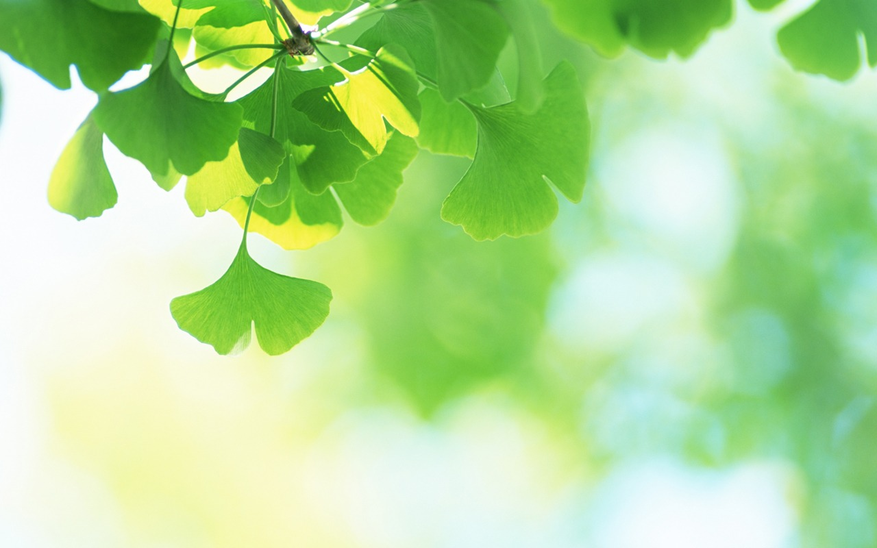 summer greeny - fresh green leaves photos 1280x800第32张桌面